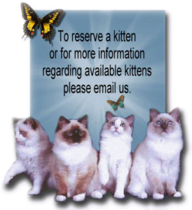 available_kittens